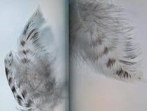 Gruppo di piume del gufo macchiate gray Fotografia Stock