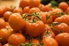 Gruppo di pomodori Fotografia Stock Libera da Diritti