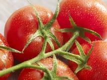 Gruppo di pomodori con le gocce su  Fotografia Stock