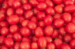 Gruppo di pomodori freschi Immagine Stock