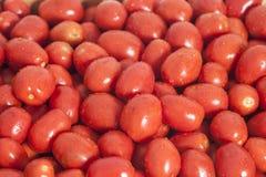 Gruppo di pomodori rossi maturi sani Immagini Stock