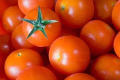Gruppo di pomodoro rosso Fotografia Stock