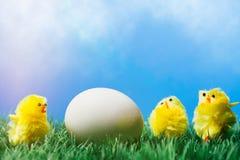 Gruppo di pulcini che circondano un uovo su erba Fotografia Stock Libera da Diritti