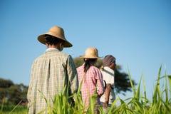 Gruppo di retrovisione di agricoltori asiatici tradizionali Immagini Stock