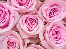 Gruppo di rose rosa fotografie stock