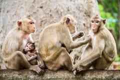 Gruppo di scimmie Fotografia Stock