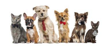 Gruppo di seduta dei gatti e dei cani Immagini Stock Libere da Diritti