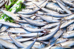 Gruppo di sgombri al mercato ittico Fotografia Stock