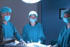 Gruppo di stanza in funzione dell'ambulatorio veterinario Fotografie Stock Libere da Diritti