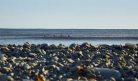 Gruppo di surfisti che aspettano le onde fredde un giorno soleggiato con bohk Fotografia Stock Libera da Diritti