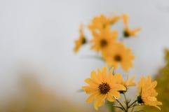 Gruppo di terminali dei fiori fotografie stock