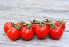 Gruppo di terminali dei pomodori del cocktail immagine stock