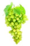 Gruppo di terminali dell'uva verde isolato su bianco immagine stock