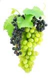 Gruppo di terminali dell'uva verde isolato su bianco immagini stock