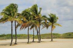 Gruppo di terminali di Tress della palma Fotografie Stock
