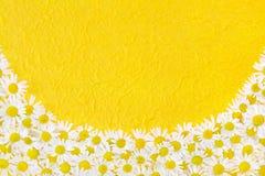 Gruppo di teste di fiore della camomilla sopra pape handmade Immagine Stock Libera da Diritti