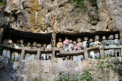 Gruppo di toraja di tana dell'effigie Fotografie Stock Libere da Diritti