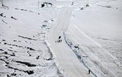 Gruppo di trekkers che camminano sulla neve nell'estate Plateau Rosa, ` Aosta, Italia di Val D fotografie stock