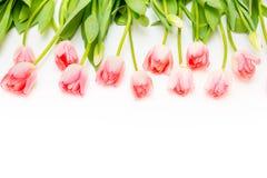 Gruppo di tulipani rosa dei fiori su un fondo bianco Fotografia Stock Libera da Diritti