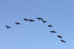Gruppo di uccelli Immagine Stock Libera da Diritti