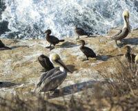 Gruppo di uccelli marini che riposano su una roccia dall'acqua Fotografia Stock