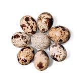 Gruppo di uova di quaglia Immagine Stock