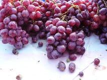 Gruppo di uva rossa fresca Immagini Stock