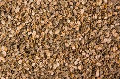 Gruppo di vecchi semi rimasti del pomodoro Fotografia Stock