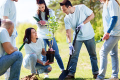 Gruppo di volontari che piantano albero in parco Immagine Stock Libera da Diritti