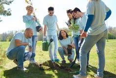 Gruppo di volontari che piantano albero in parco Immagine Stock