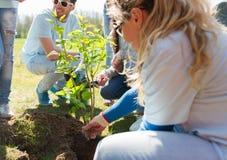 Gruppo di volontari che piantano albero in parco fotografia stock