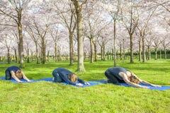Gruppo di yoga che allunga sull'erba verde Fotografia Stock Libera da Diritti