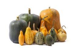 Gruppo di zucche dei tipi e dei colori differenti Fotografie Stock