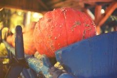 Gruppo di zucche variopinte sul canestro rurale Fotografia Stock Libera da Diritti