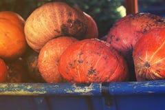 Gruppo di zucche variopinte sul canestro rurale Fotografie Stock Libere da Diritti
