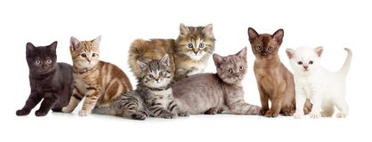 Gruppo differente dei gatti o del gattino Immagine Stock