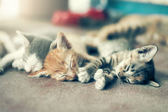 Gruppo drammatico di momento A di gattino differente che dorme sul floo Fotografie Stock