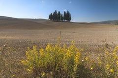 Gruppo famoso degli alberi di cipresso in Toscana Immagini Stock Libere da Diritti