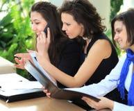 Gruppo femminile di affari sul lavoro che studia i documenti importanti Fotografia Stock