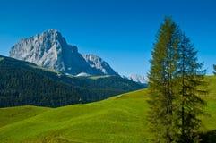Gruppo Sassolungo e foresta, dolomia Fotografia Stock Libera da Diritti