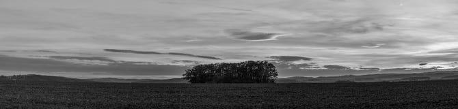 Gruppo solo di alberi nel campo Immagine Stock