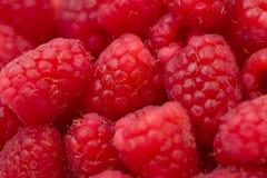gruppraspberrys arkivfoton