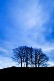grupy drzew Zdjęcia Stock