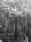 Gruselige Bäume Stockfotos