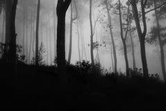 Gruseliger nebeliger Wald lizenzfreie stockfotografie