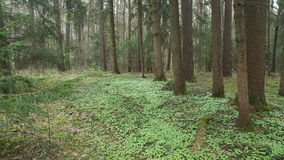 Gruseliger Wald Lizenzfreie Stockfotos