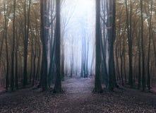 Gruseliges Blaulicht im nebeligen Wald mit Kreis von dunklen Bäumen lizenzfreie stockfotografie