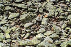 Grustextur i de österrikiska fjällängarna Royaltyfri Foto