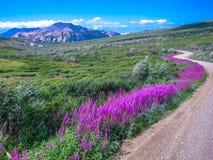 Grusväg Denali nationalpark, Alaska Royaltyfri Bild