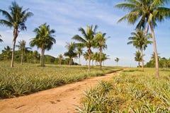 Grusväg i ananasfarn Arkivfoto